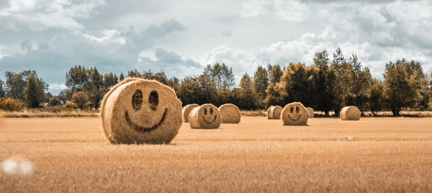 Smiling hay stacks