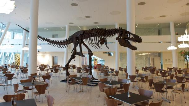 Saxo Bank T Rex dinosaur in lunch canteen